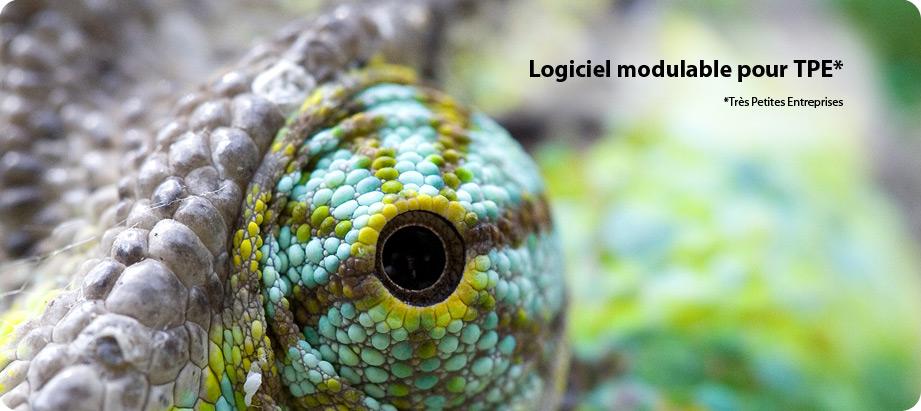 AGILUS, le logiciel caméléon pour vos fichiers et vos données CRM, GED, ECM.